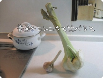 10.6.20.4茶茶