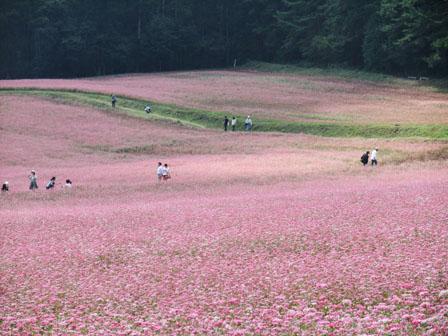 そば祭り ピンクのじゅうたんフカフカ