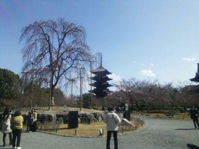 春の東寺_桜にはちょっと早かった