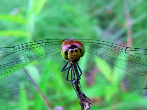 R0012084蜻蛉