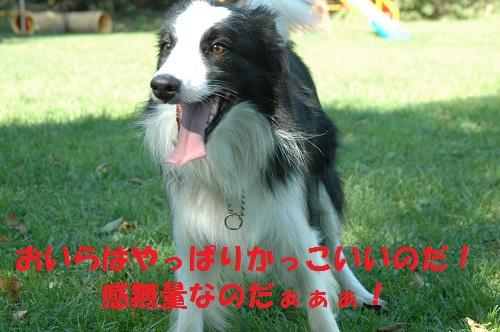 201110911.jpg