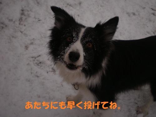 201112034.jpg