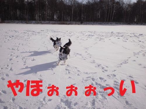 201112132.jpg
