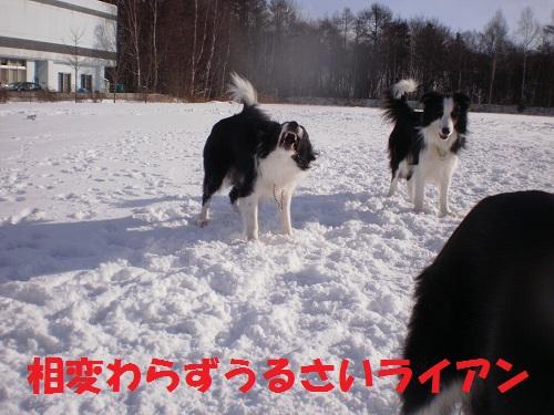 201112136.jpg