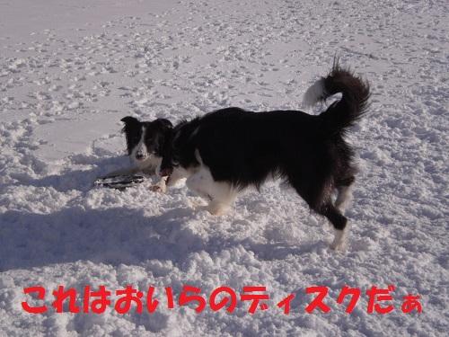 201112137.jpg