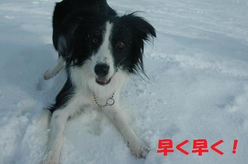 201112152.jpg