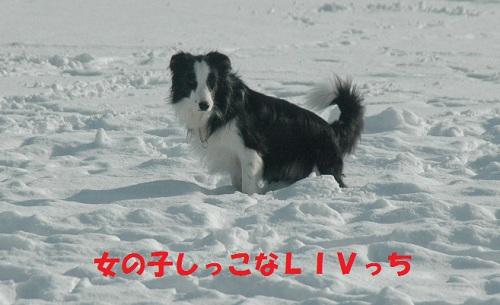 201112156.jpg