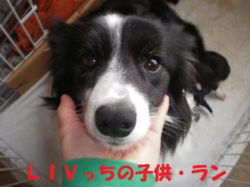 201112171.jpg