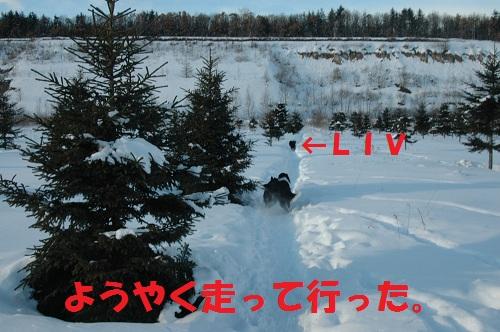 2012114DSC_0789.jpg