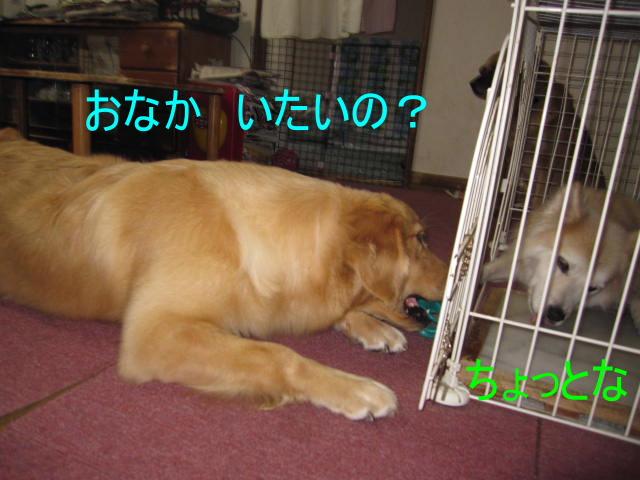 IMG_8932a.jpg