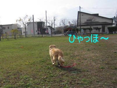 IMG_9217a.jpg