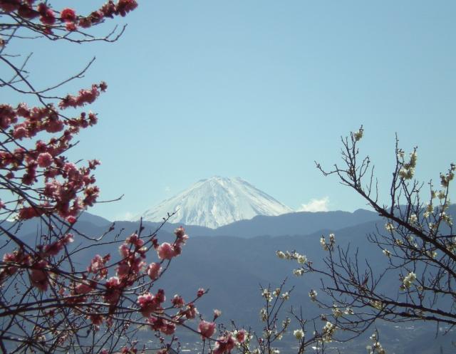 不老園より富士山