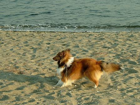 砂浜たっのし~ぃ。