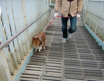 私に階段昇らせないでほしいですの。