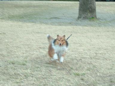 走ればいいんでしょ~~~!!ですの。