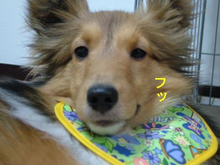 (´,_>☆) キラーン!