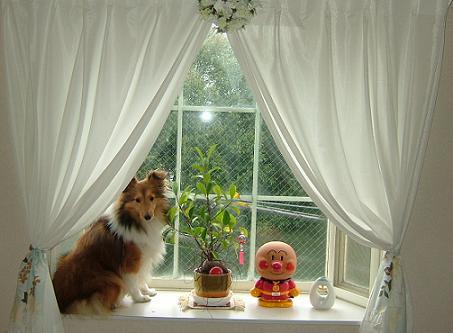 深窓の令嬢ですの・・・。