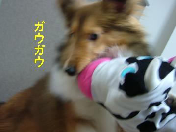ヽ(`Д´)ノムキョーゥ!!