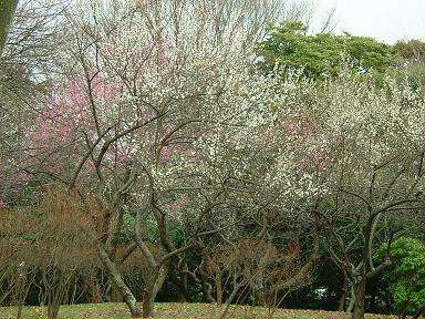 キレイに咲いておりました。
