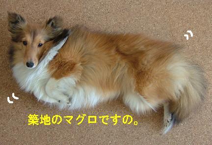 ピチピチ>゜))))彡