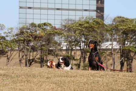 千葉ポートパーク 035-1