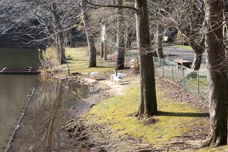 いずみ自然公園 061-1