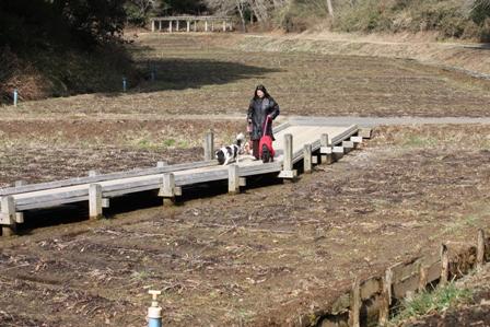 昭和の森 湿地植物園2