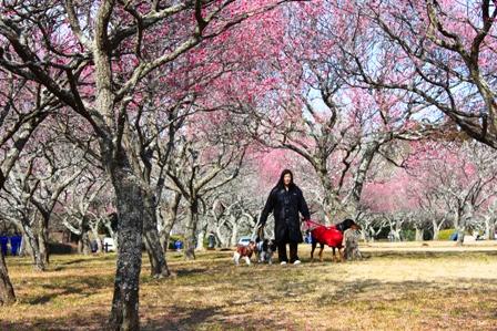 昭和の森 064