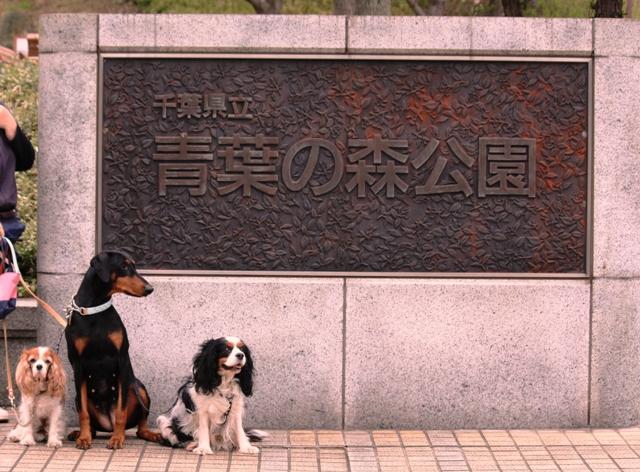 青葉の森公園2010 071