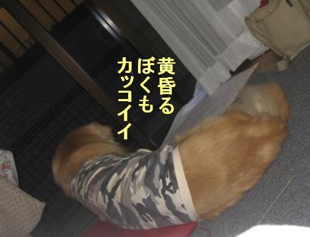 091031IMG_3428.jpg