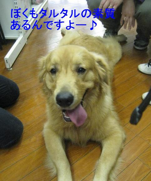 091101IMG_3507.jpg