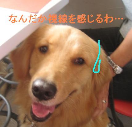 09IMG_3298.jpg