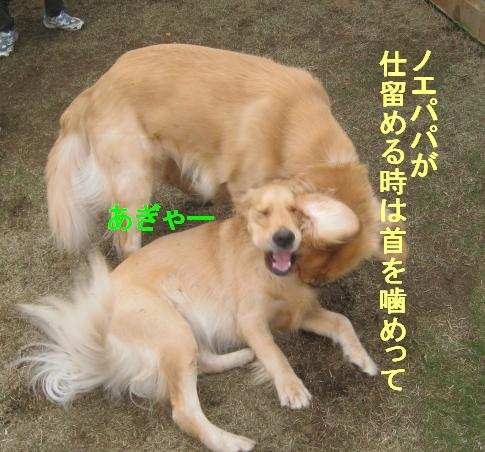 09IMG_3306.jpg