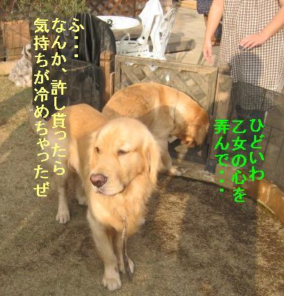 09IMG_3317.jpg