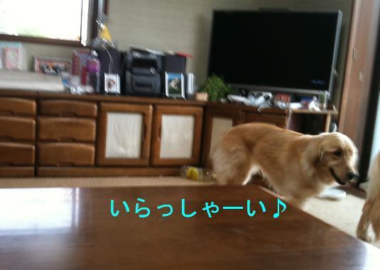 IMG_0843.jpg