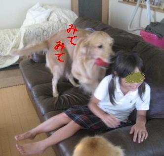 misatoIMG_3070.jpg