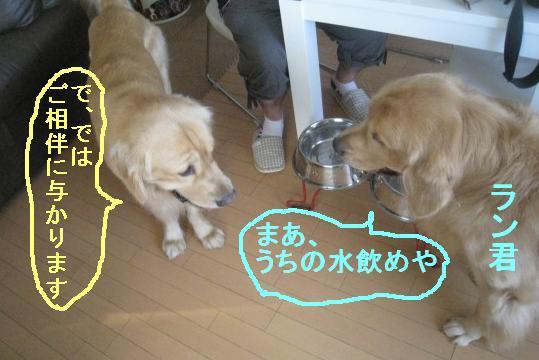 misatoIMG_3072.jpg