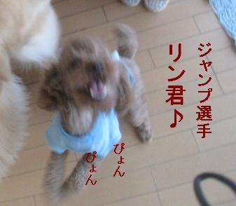 misatoIMG_3075.jpg