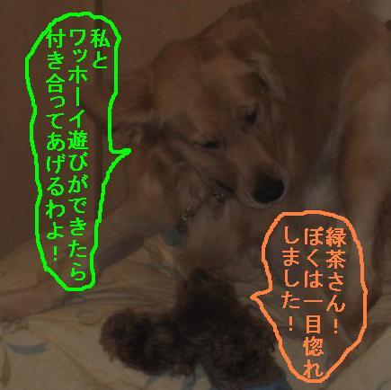 misatoIMG_3092.jpg
