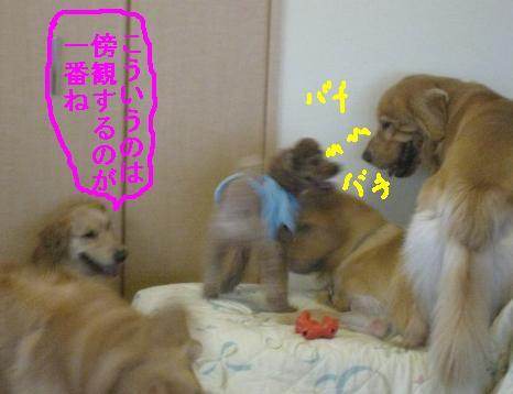 misatoIMG_3098.jpg