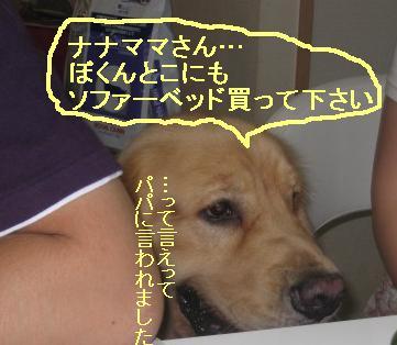 misatoIMG_3109.jpg