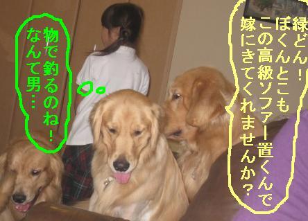 misatoIMG_3116.jpg