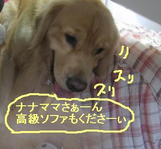 misatoIMG_3119.jpg