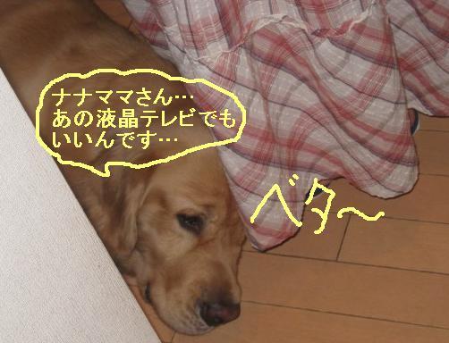 misatoIMG_3129.jpg