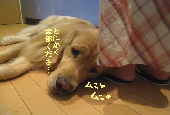 misatoIMG_3130.jpg