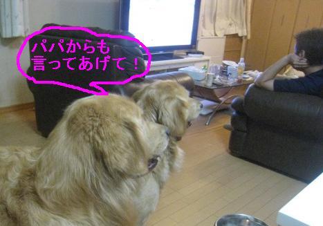 misatoIMG_3146.jpg