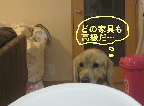 misatoIMG_3150.jpg