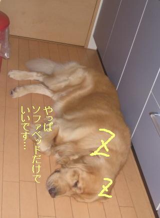 misatoIMG_3165.jpg