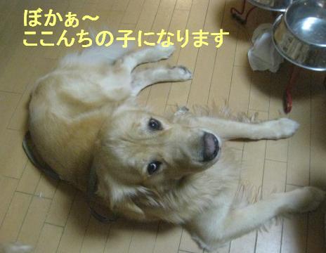 misatoIMG_3177.jpg
