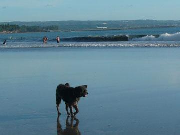 クタビーチの犬